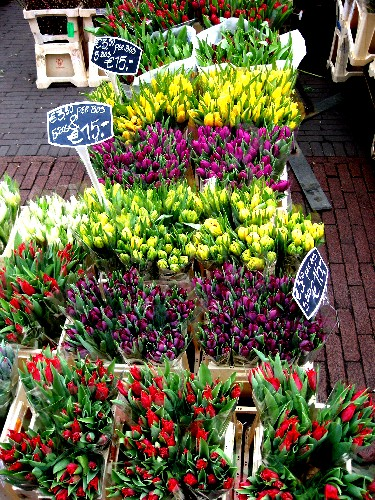 tulips_for_sale.JPG